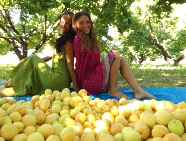 Фруктовое лето. Смолянка рассказала, как превратилась в сборщика фруктов и счастливого человека