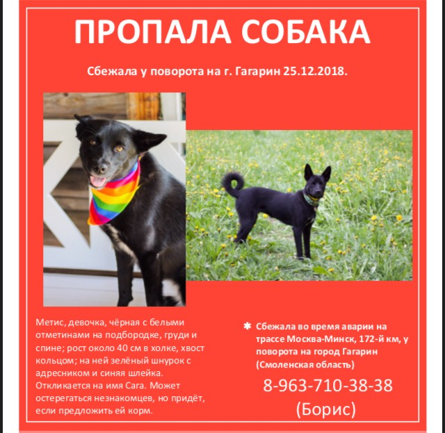 В Смоленской области идут поиски пропавшей после ДТП собаки