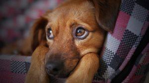 собака прививка бешенство