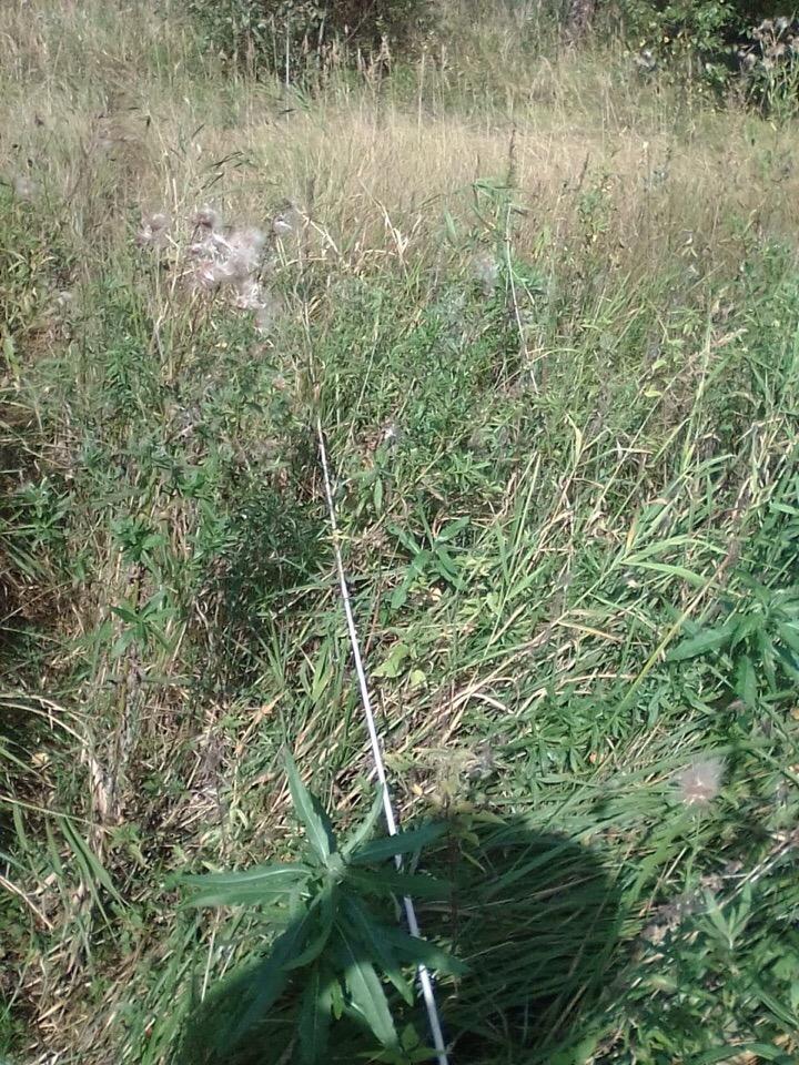 Смолян предупреждают об опасном кабеле возле речки