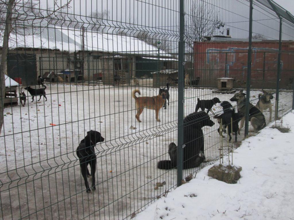 """Воспитанники детского сада """"Аист"""" в Смоленске собрали корм для бездомных животных"""