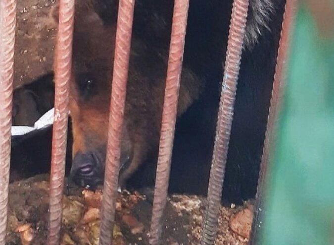 На трассе в Смоленской области медведицу держат в клетке без воды и еды - соцсети